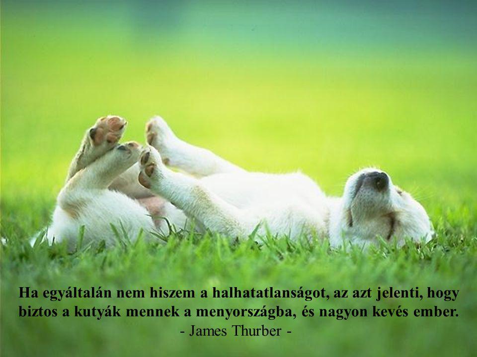 Ha egyáltalán nem hiszem a halhatatlanságot, az azt jelenti, hogy biztos a kutyák mennek a menyországba, és nagyon kevés ember.