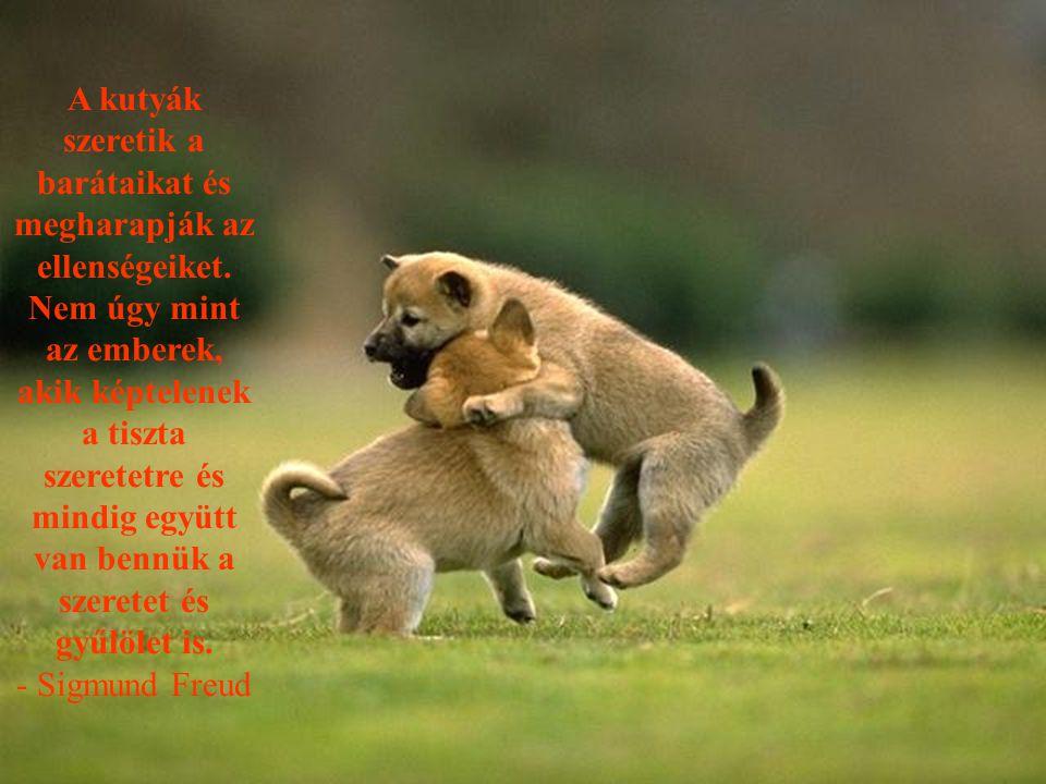 A kutyák szeretik a barátaikat és megharapják az ellenségeiket.
