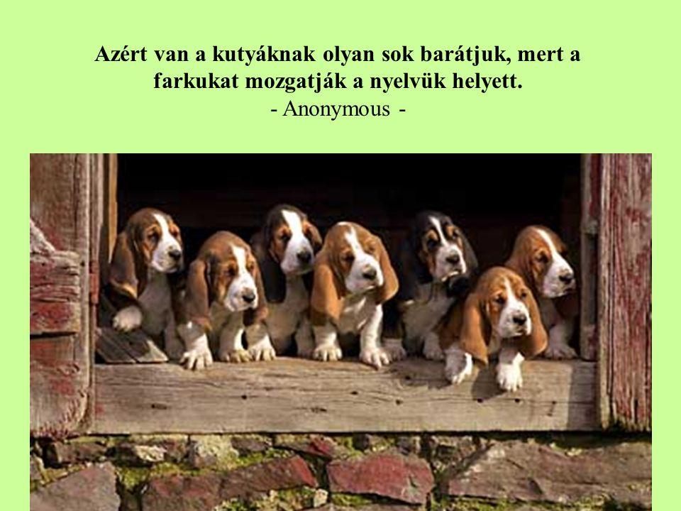 Azért van a kutyáknak olyan sok barátjuk, mert a farkukat mozgatják a nyelvük helyett.