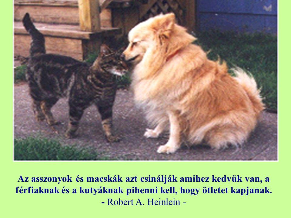Az asszonyok és macskák azt csinálják amihez kedvük van, a férfiaknak és a kutyáknak pihenni kell, hogy ötletet kapjanak.