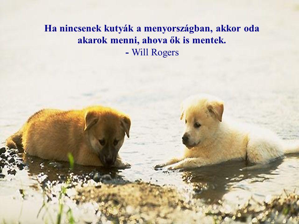 Kutyákról és emberekről …