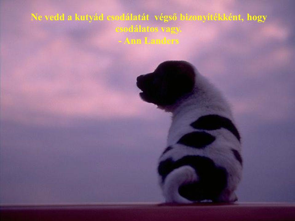 Ne vedd a kutyád csodálatát végső bizonyítékként, hogy csodálatos vagy. - Ann Landers