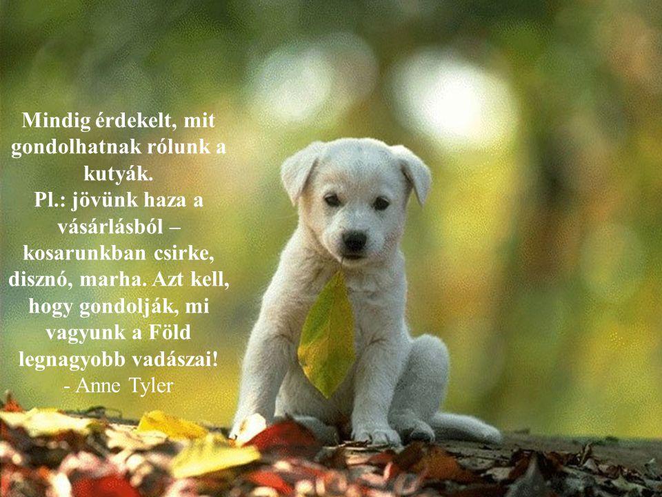 Csodálom, hogy más kutyák azt hiszik, hogy a pudli egy őrült vallás tagja. - Rita Rudner -