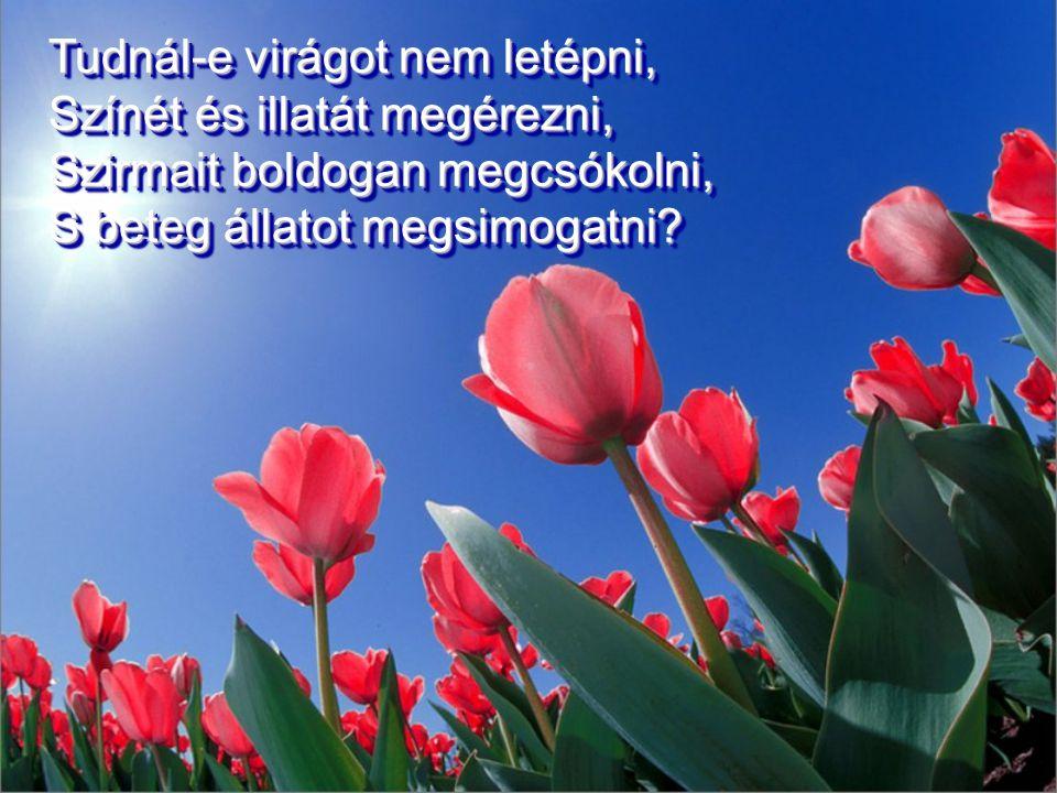 Tudnál-e virágot nem letépni, Színét és illatát megérezni, Szirmait boldogan megcsókolni, S beteg állatot megsimogatni.