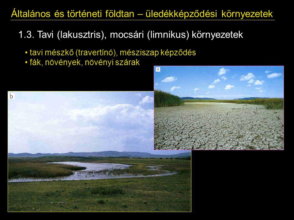 Általános és történeti földtan – üledékképződési környezetek 1.3. Tavi (lakusztris), mocsári (limnikus) környezetek tavi mészkő (travertínó), mészisza