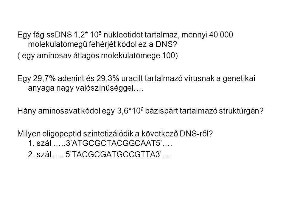 Egy fág ssDNS 1,2* 10 5 nukleotidot tartalmaz, mennyi 40 000 molekulatömegű fehérjét kódol ez a DNS? ( egy aminosav átlagos molekulatömege 100) Egy 29