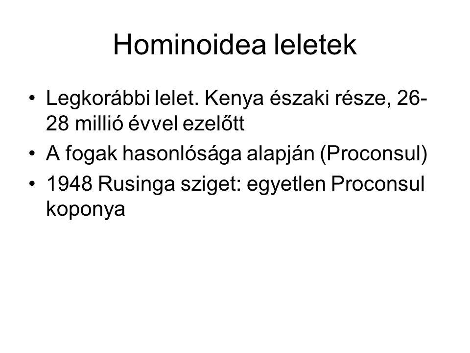 Hominoidea leletek Legkorábbi lelet. Kenya északi része, 26- 28 millió évvel ezelőtt A fogak hasonlósága alapján (Proconsul) 1948 Rusinga sziget: egye