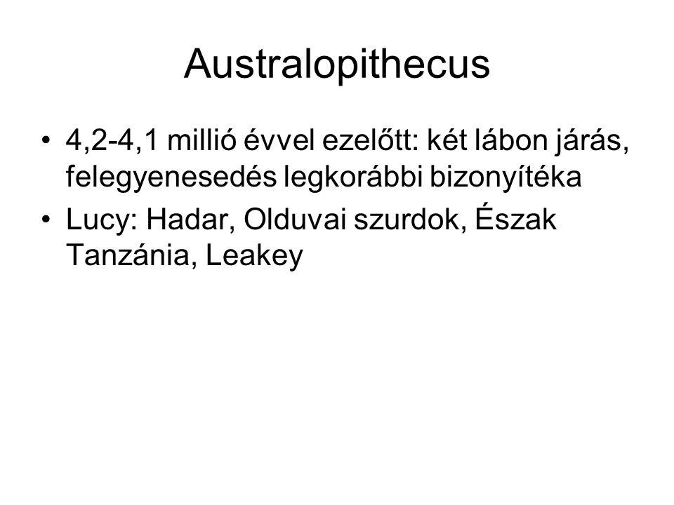 Australopithecus 4,2-4,1 millió évvel ezelőtt: két lábon járás, felegyenesedés legkorábbi bizonyítéka Lucy: Hadar, Olduvai szurdok, Észak Tanzánia, Le
