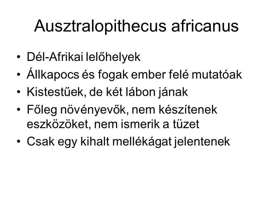 Ausztralopithecus africanus Dél-Afrikai lelőhelyek Állkapocs és fogak ember felé mutatóak Kistestűek, de két lábon jának Főleg növényevők, nem készíte