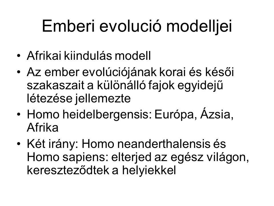 Emberi evolució modelljei Afrikai kiindulás modell Az ember evolúciójának korai és késői szakaszait a különálló fajok egyidejű létezése jellemezte Hom