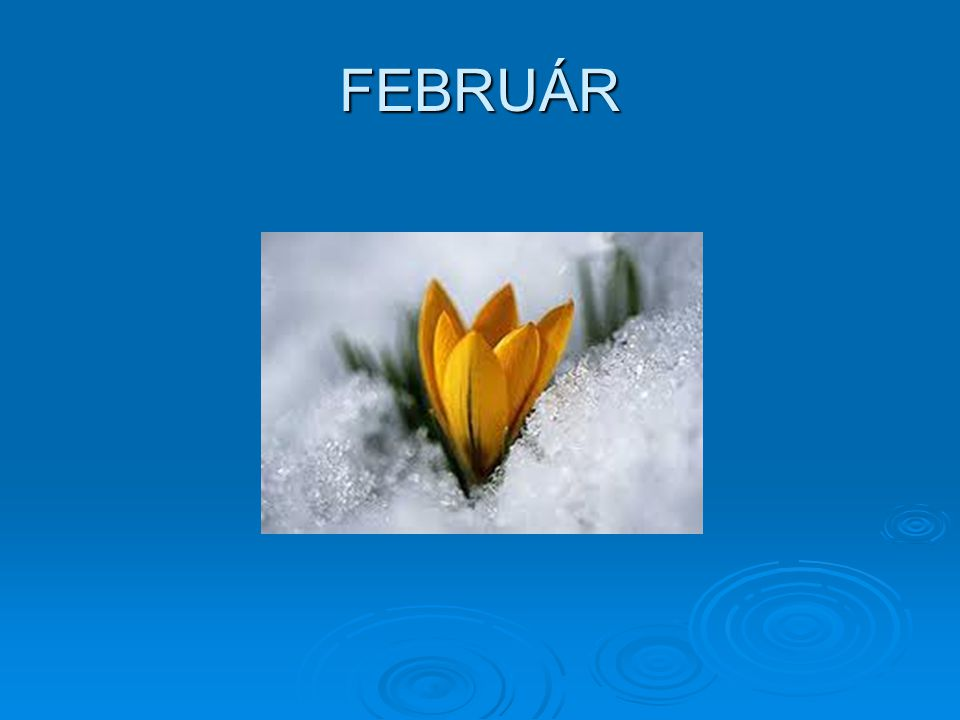 Valentin napi programok 2014. február 13.