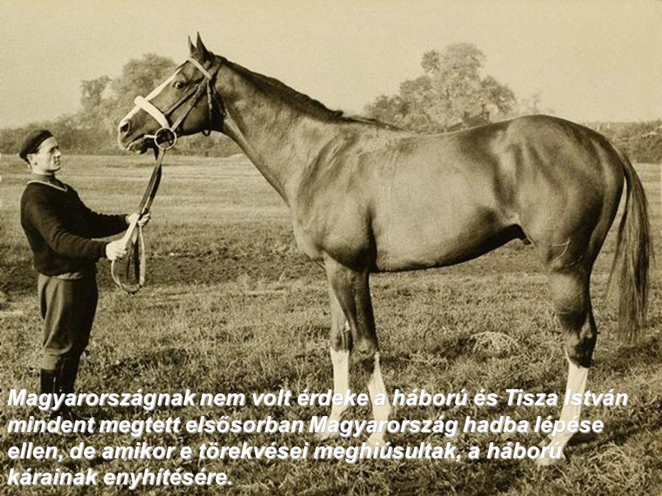 Magyarországnak nem volt érdeke a háború és Tisza István mindent megtett elsősorban Magyarország hadba lépése ellen, de amikor e törekvései meghiúsult