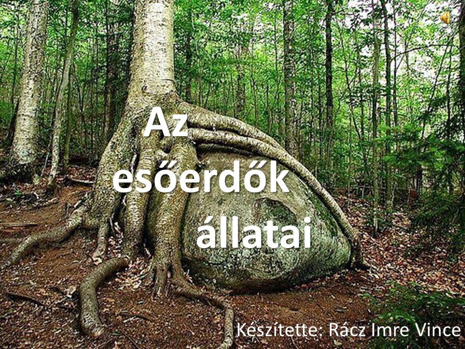 Az esőerdők állatai Az esőerdők állatai Készítette: Rácz Imre Vince
