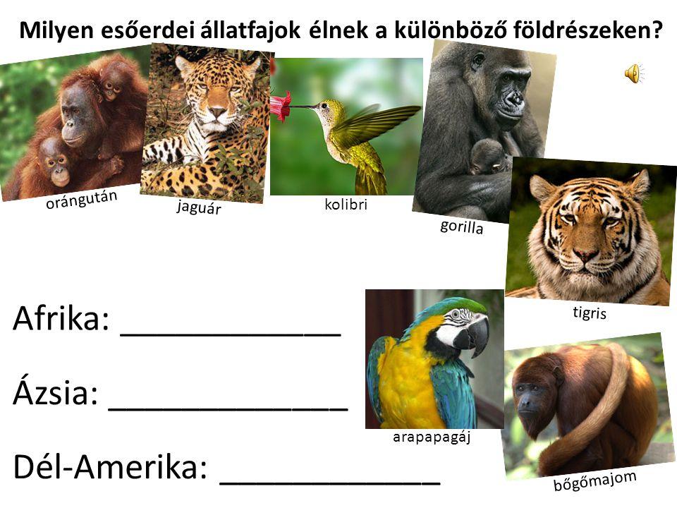 Milyen esőerdei állatfajok élnek a különböző földrészeken.