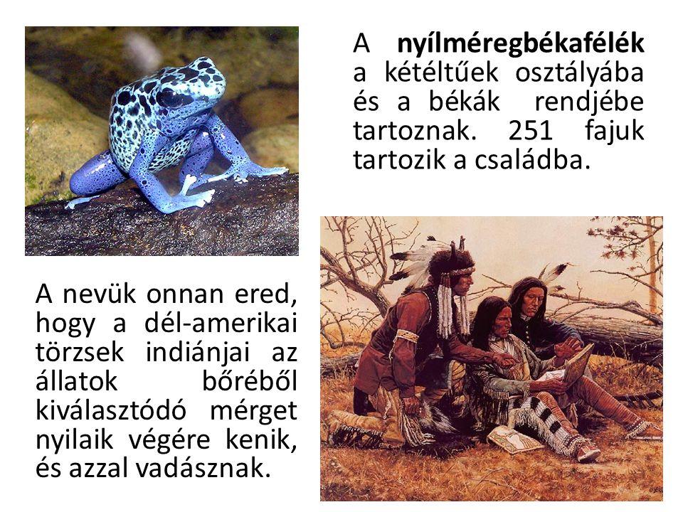 Amazon indiánok fúvócsővel (Brazília) A mérget különböző növényekből vonták ki, de a leggyakoribb az volt, amikor a nyílméregbéka váladékát használták.