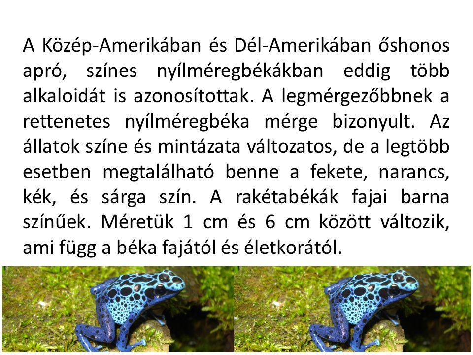 A rettenetes nyílméregbéka A veszélyeztetett rettenetes nyílméregbéka a világ legmérgezőbb famászóbékája.