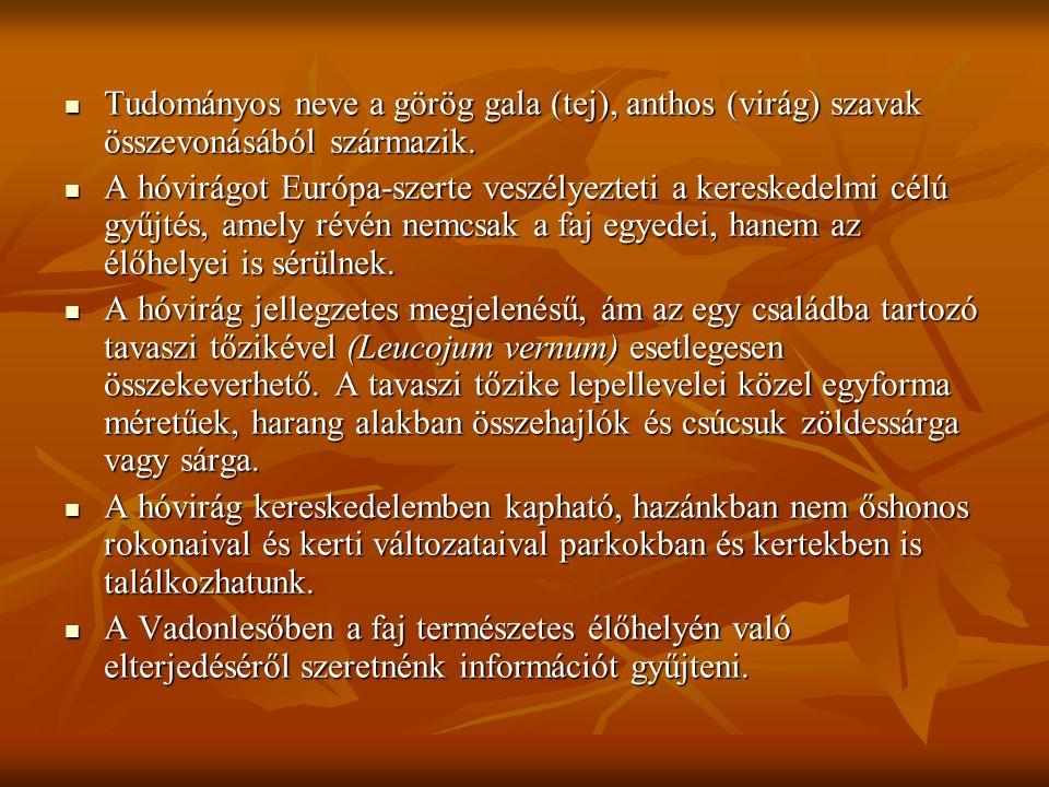 Tudományos neve a görög gala (tej), anthos (virág) szavak összevonásából származik. Tudományos neve a görög gala (tej), anthos (virág) szavak összevon