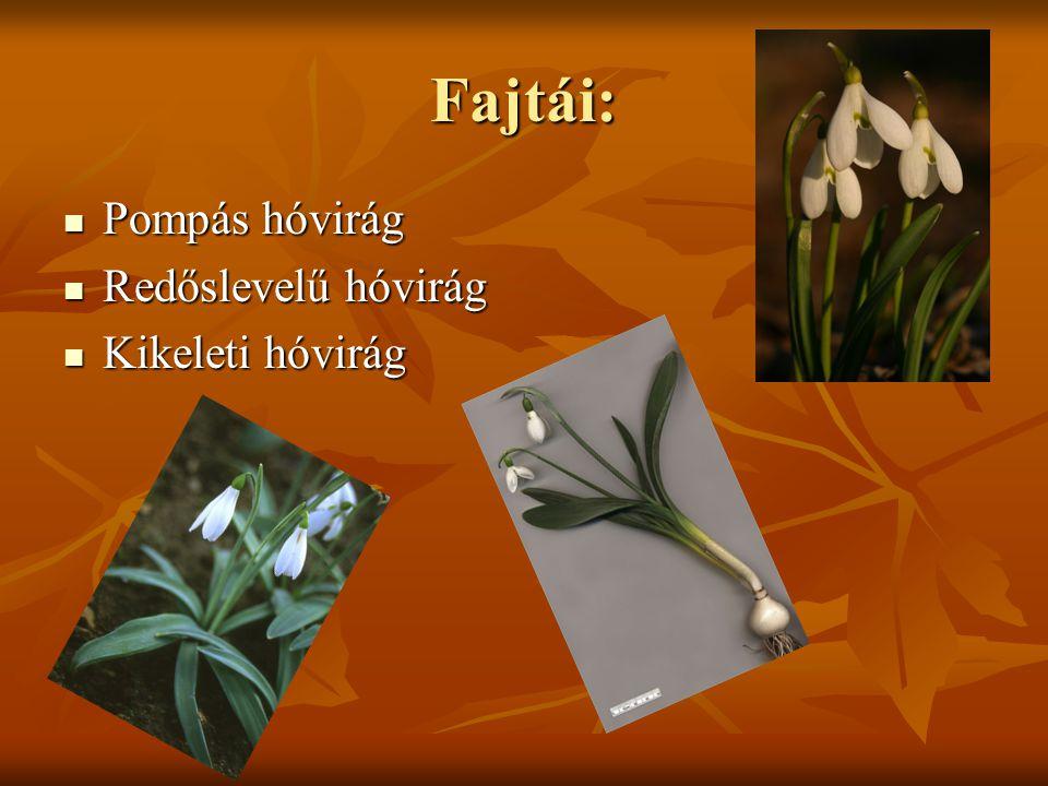 Pompás hóvirág A pompás hóvirág (Galanthus elwesii) Dél- Ukrajnában, Kis-Ázsiában és a Balkánon őshonos.