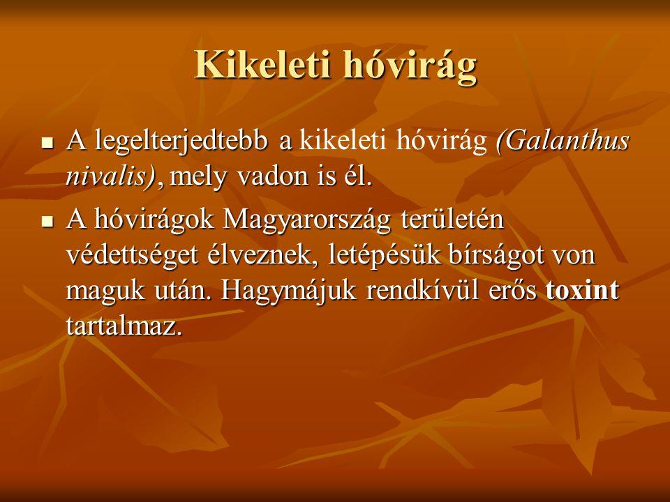 Előfordulása Dél-Ukrajnában, Kis-Ázsiában és a Balkánon őshonos Dél-Ukrajnában, Kis-Ázsiában és a Balkánon őshonos A hóvirágok Magyarország területén védettséget élveznek.
