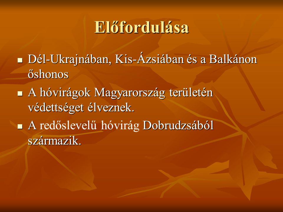 Előfordulása Dél-Ukrajnában, Kis-Ázsiában és a Balkánon őshonos Dél-Ukrajnában, Kis-Ázsiában és a Balkánon őshonos A hóvirágok Magyarország területén