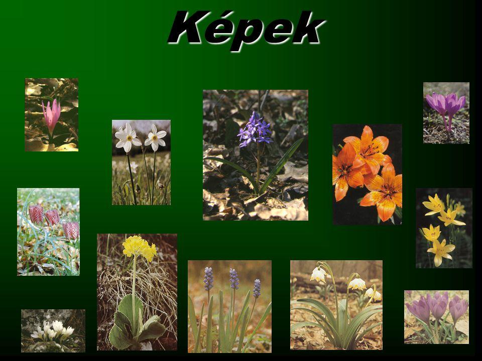 A hóvirág 16 fajuk él, melyek a Balkántól a Kaszpi-tóig találhatók meg.