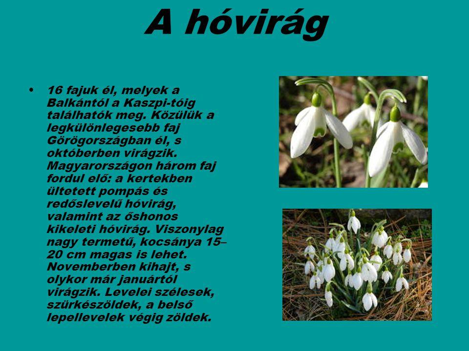 A hóvirág 16 fajuk él, melyek a Balkántól a Kaszpi-tóig találhatók meg. Közülük a legkülönlegesebb faj Görögországban él, s októberben virágzik. Magya