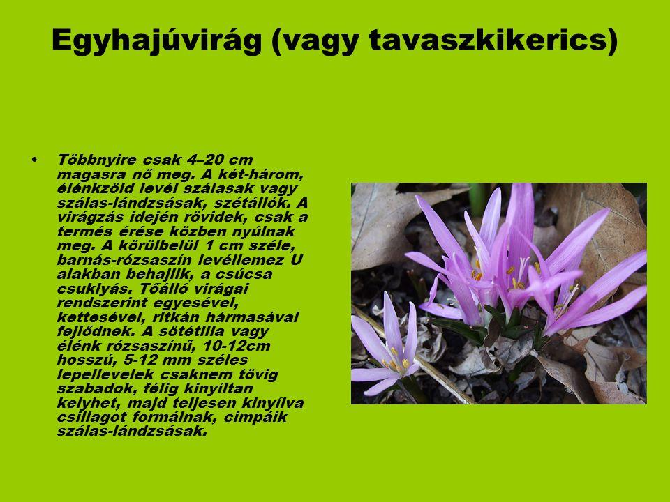 Egyhajúvirág (vagy tavaszkikerics) Többnyire csak 4–20 cm magasra nő meg. A két-három, élénkzöld levél szálasak vagy szálas-lándzsásak, szétállók. A v