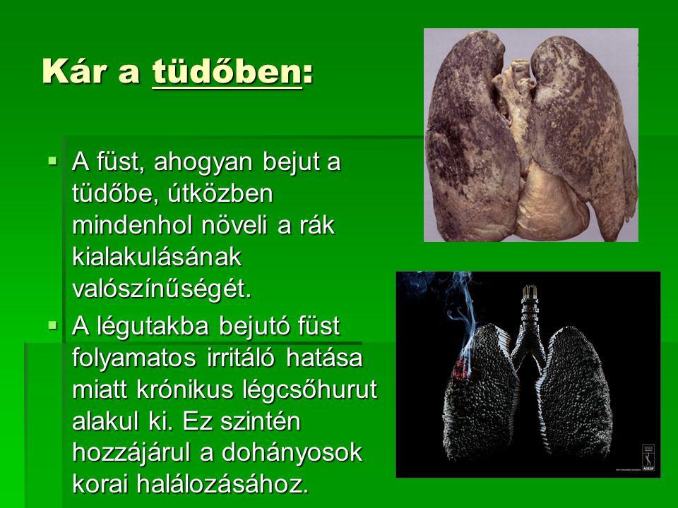 Kár a tüdőben:  A füst, ahogyan bejut a tüdőbe, útközben mindenhol növeli a rák kialakulásának valószínűségét.  A légutakba bejutó füst folyamatos i