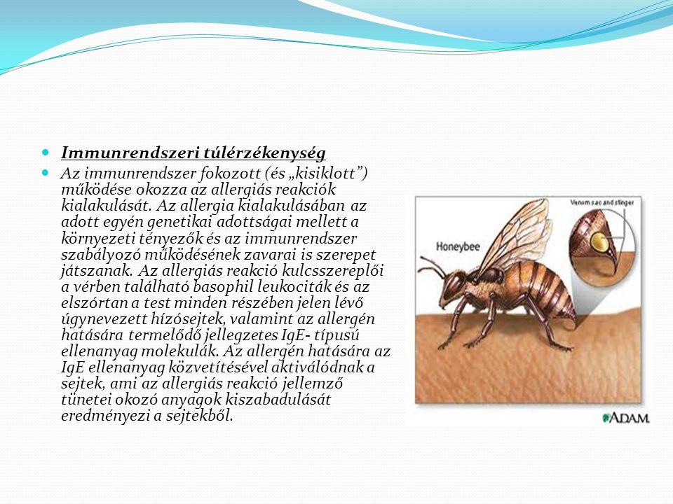 """Immunrendszeri túlérzékenység Az immunrendszer fokozott (és """"kisiklott"""") működése okozza az allergiás reakciók kialakulását. Az allergia kialakulásába"""