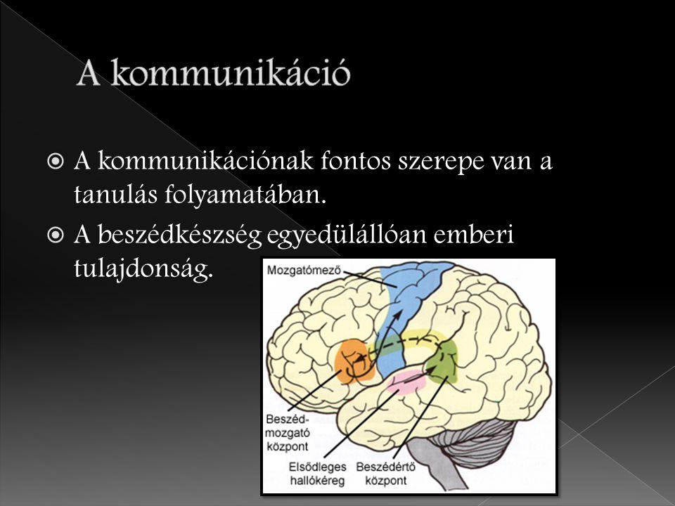  A kommunikációnak fontos szerepe van a tanulás folyamatában.  A beszédkészség egyedülállóan emberi tulajdonság.