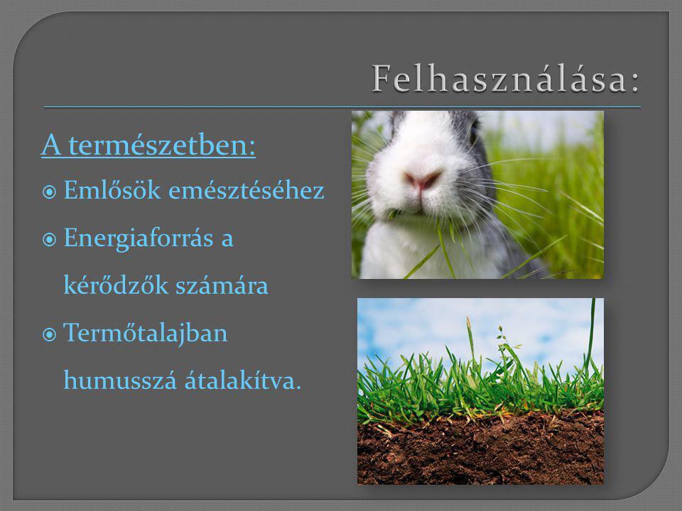 A természetben:  Emlősök emésztéséhez  Energiaforrás a kérődzők számára  Termőtalajban humusszá átalakítva.