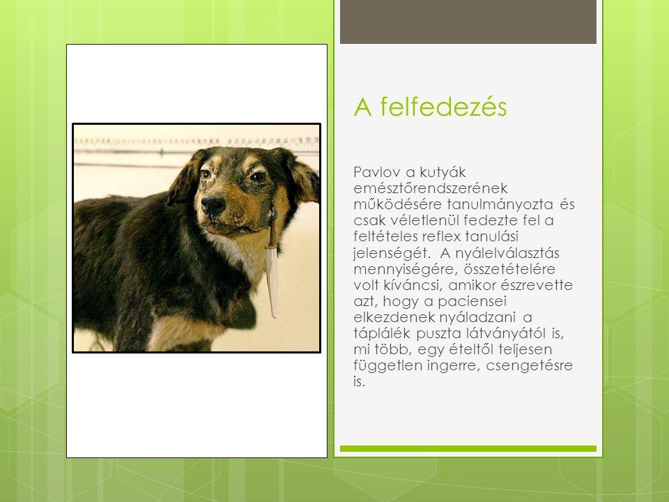A felfedezés Pavlov a kutyák emésztőrendszerének működésére tanulmányozta és csak véletlenül fedezte fel a feltételes reflex tanulási jelenségét.