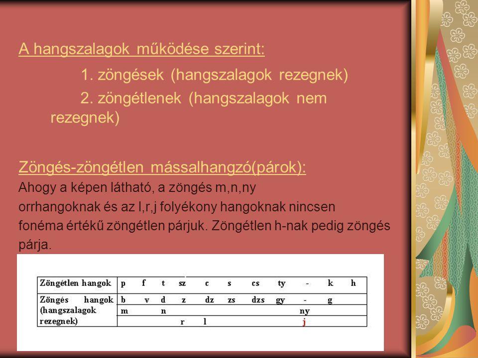 A hangszalagok működése szerint: 1. zöngések (hangszalagok rezegnek) 2. zöngétlenek (hangszalagok nem rezegnek) Zöngés-zöngétlen mássalhangzó(párok):