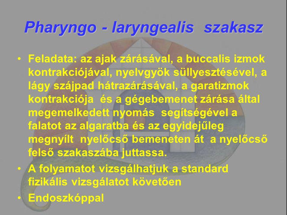Pharyngo - laryngealis szakasz Feladata: az ajak zárásával, a buccalis izmok kontrakciójával, nyelvgyök süllyesztésével, a lágy szájpad hátrazárásával