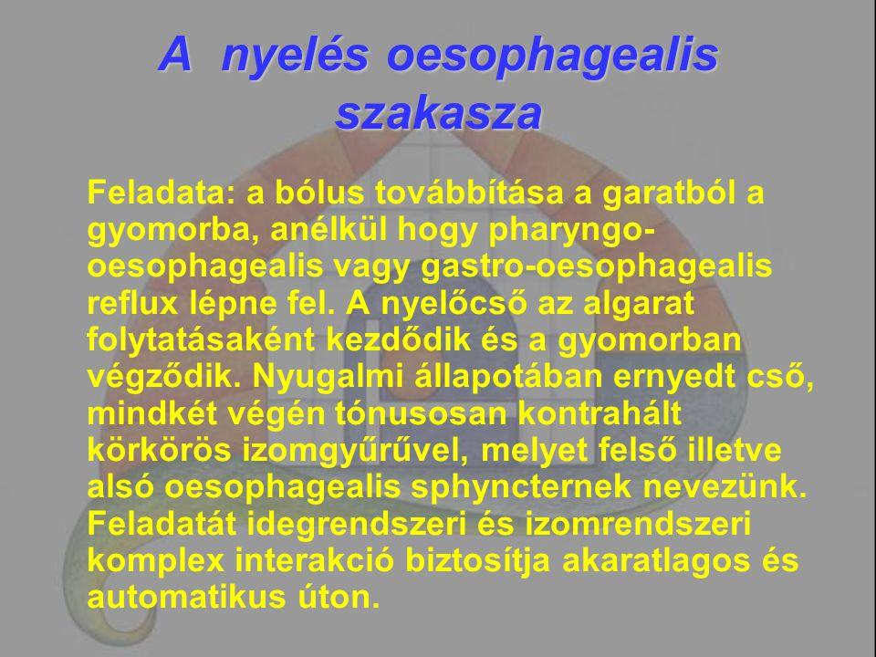 A nyelés oesophagealis szakasza Feladata: a bólus továbbítása a garatból a gyomorba, anélkül hogy pharyngo- oesophagealis vagy gastro-oesophagealis re