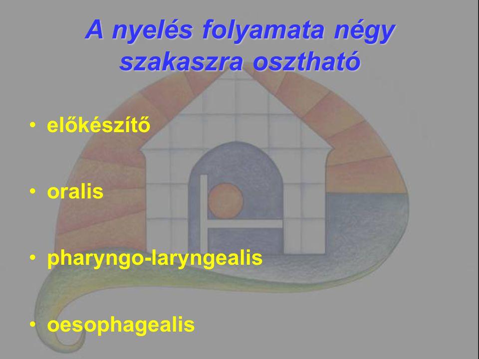 Előkészítő szakasz Feladata: a falat síkosítása, konzisztenciájának és méretének kialakítása és a bólus nyelvhátra juttatása.