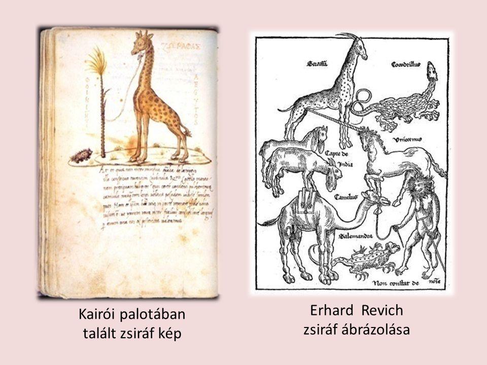 Kairói palotában talált zsiráf kép Erhard Revich zsiráf ábrázolása