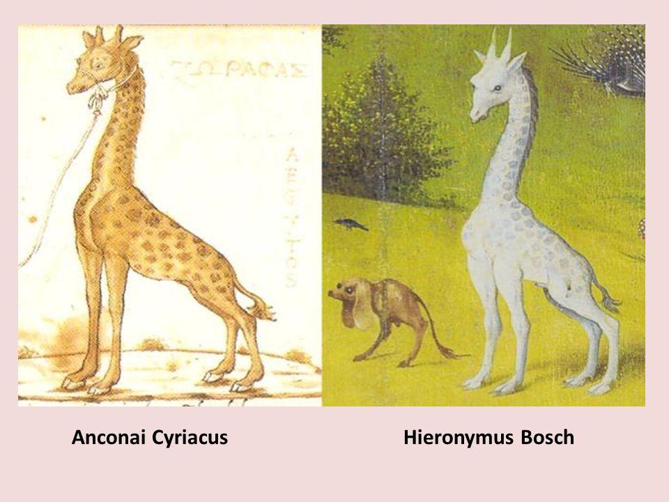 Anconai Cyriacus Hieronymus Bosch