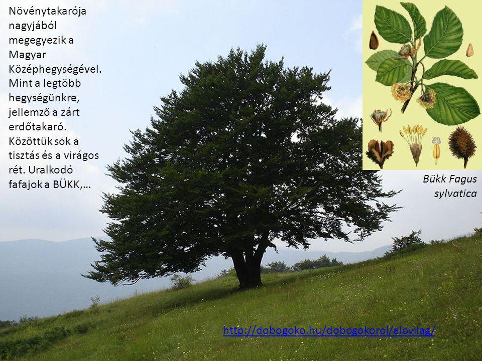 Növénytakarója nagyjából megegyezik a Magyar Középhegységével. Mint a legtöbb hegységünkre, jellemző a zárt erdőtakaró. Közöttük sok a tisztás és a vi
