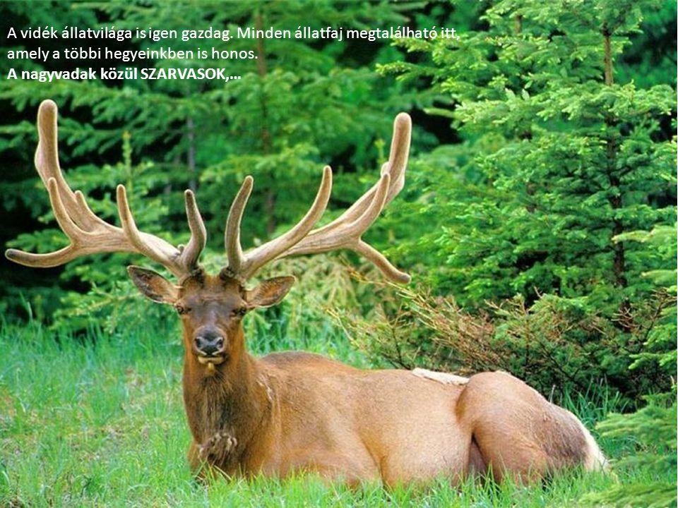 A vidék állatvilága is igen gazdag. Minden állatfaj megtalálható itt, amely a többi hegyeinkben is honos. A nagyvadak közül SZARVASOK,…