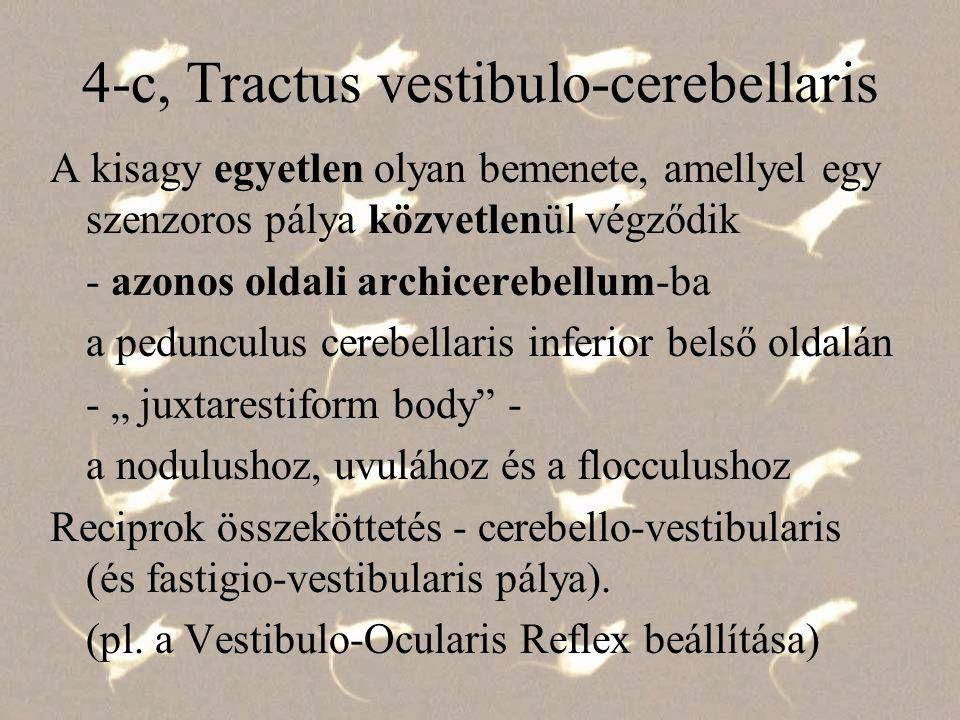 4-c, Tractus vestibulo-cerebellaris