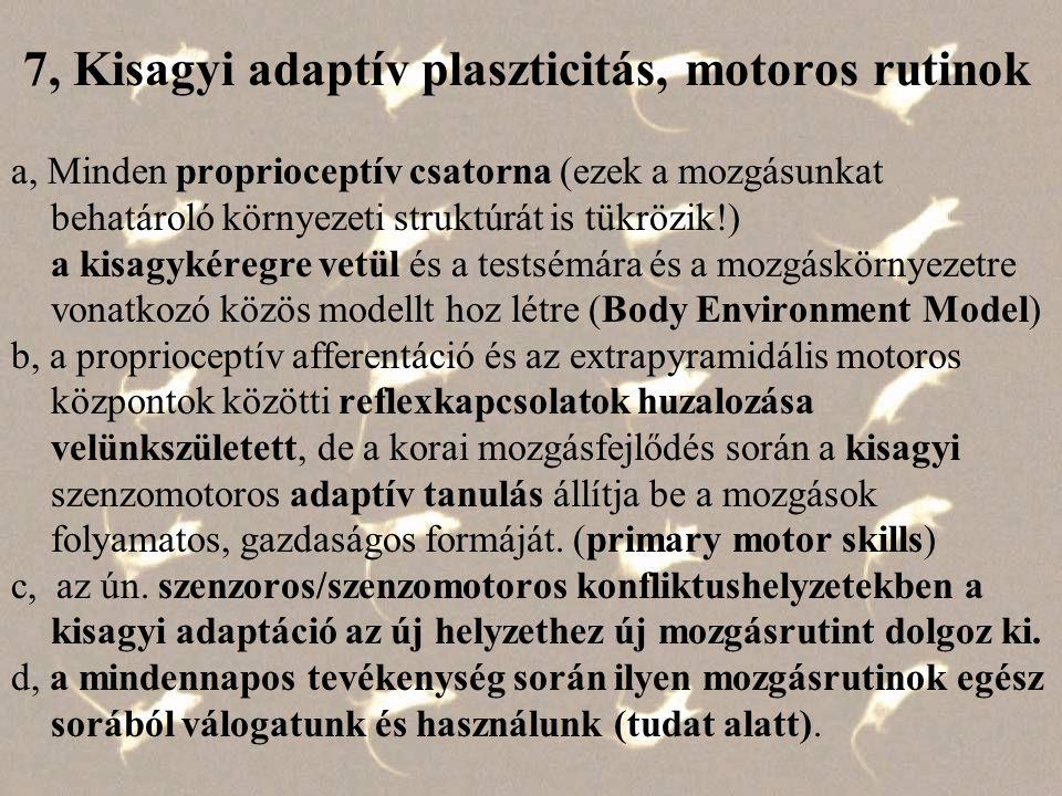 A KISAGY helye az Extrapyr.-ban A KISAGY bemenő pályái: –vesztibuláris input –proprioceptív afferentáció –mozgatókéreg - híd - középső kisagykar, –(de ált.