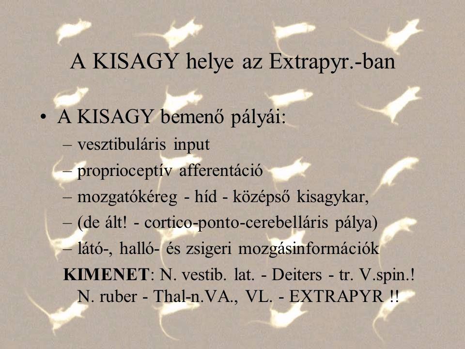 A KISAGY helye az Extrapyr.-ban A KISAGY bemenő pályái: –vesztibuláris input –proprioceptív afferentáció –mozgatókéreg - híd - középső kisagykar, –(de