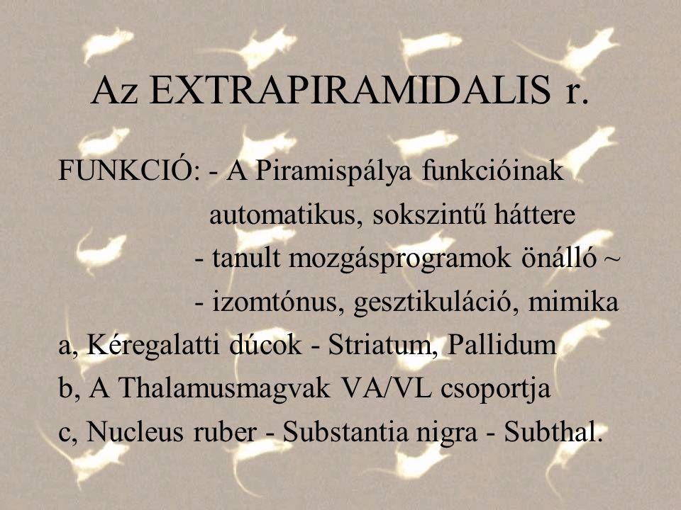 Az EXTRAPIRAMIDALIS r. FUNKCIÓ: - A Piramispálya funkcióinak automatikus, sokszintű háttere - tanult mozgásprogramok önálló ~ - izomtónus, gesztikulác