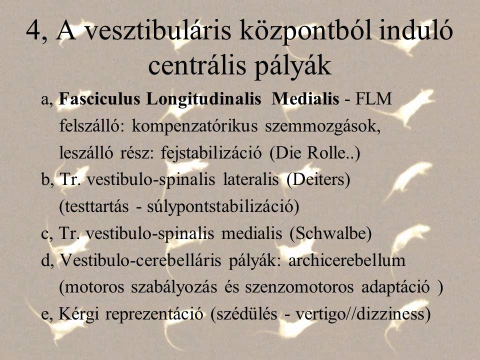 4-a, Fasciculus longitudinalis medialis - nucleus vestibularis sup., med.