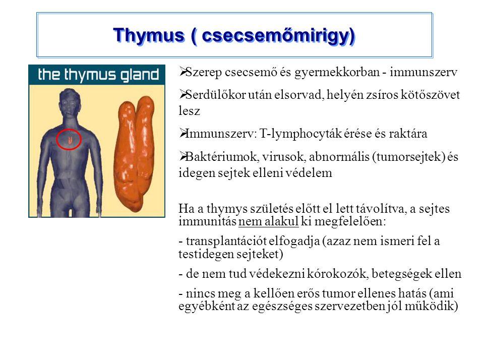 Thymus ( csecsemőmirigy)  Szerep csecsemő és gyermekkorban - immunszerv  Serdülőkor után elsorvad, helyén zsíros kötőszövet lesz  Immunszerv: T-lym