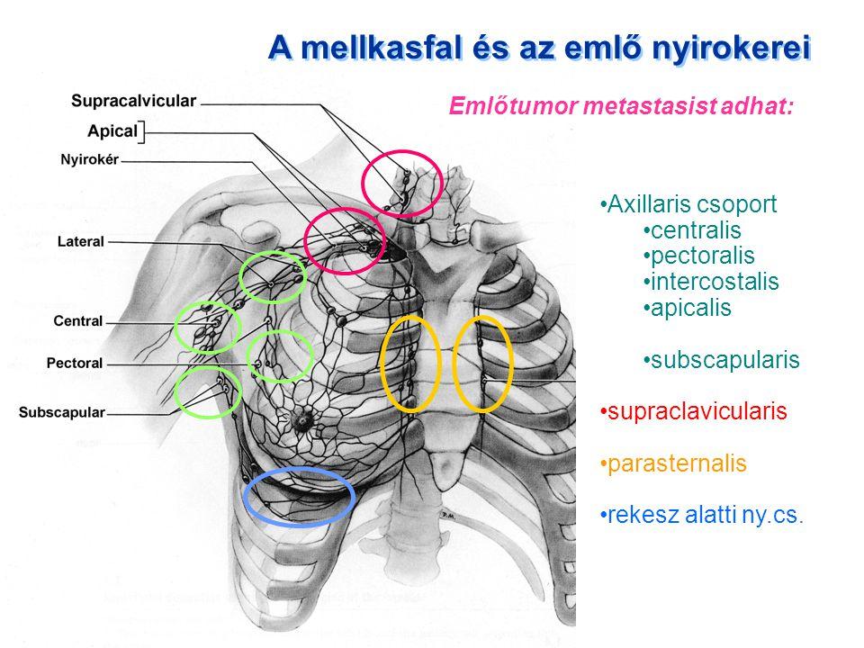 A mellkasfal és az emlő nyirokerei Axillaris csoport centralis pectoralis intercostalis apicalis subscapularis supraclavicularis parasternalis rekesz
