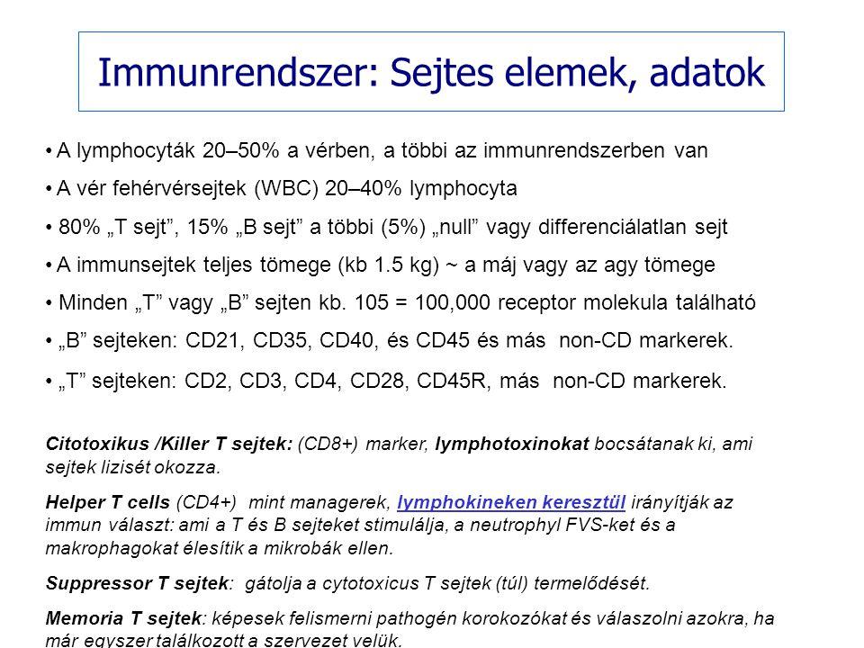 """Immunrendszer: Sejtes elemek, adatok A lymphocyták 20–50% a vérben, a többi az immunrendszerben van A vér fehérvérsejtek (WBC) 20–40% lymphocyta 80% """""""