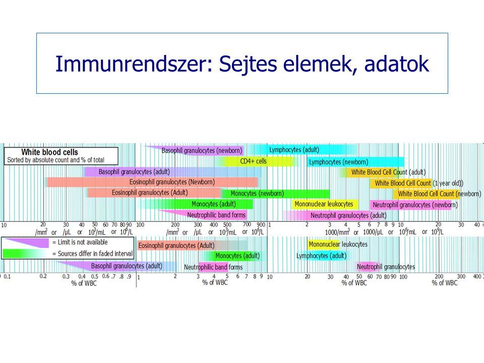 Thymus ( csecsemőmirigy)  Szerep csecsemő és gyermekkorban - immunszerv  Serdülőkor után elsorvad, helyén zsíros kötőszövet lesz  Immunszerv: T-lymphocyták érése és raktára  Baktériumok, virusok, abnormális (tumorsejtek) és idegen sejtek elleni védelem Ha a thymys születés előtt el lett távolítva, a sejtes immunitás nem alakul ki megfelelően: - transplantációt elfogadja (azaz nem ismeri fel a testidegen sejteket) - de nem tud védekezni kórokozók, betegségek ellen - nincs meg a kellően erős tumor ellenes hatás (ami egyébként az egészséges szervezetben jól működik)