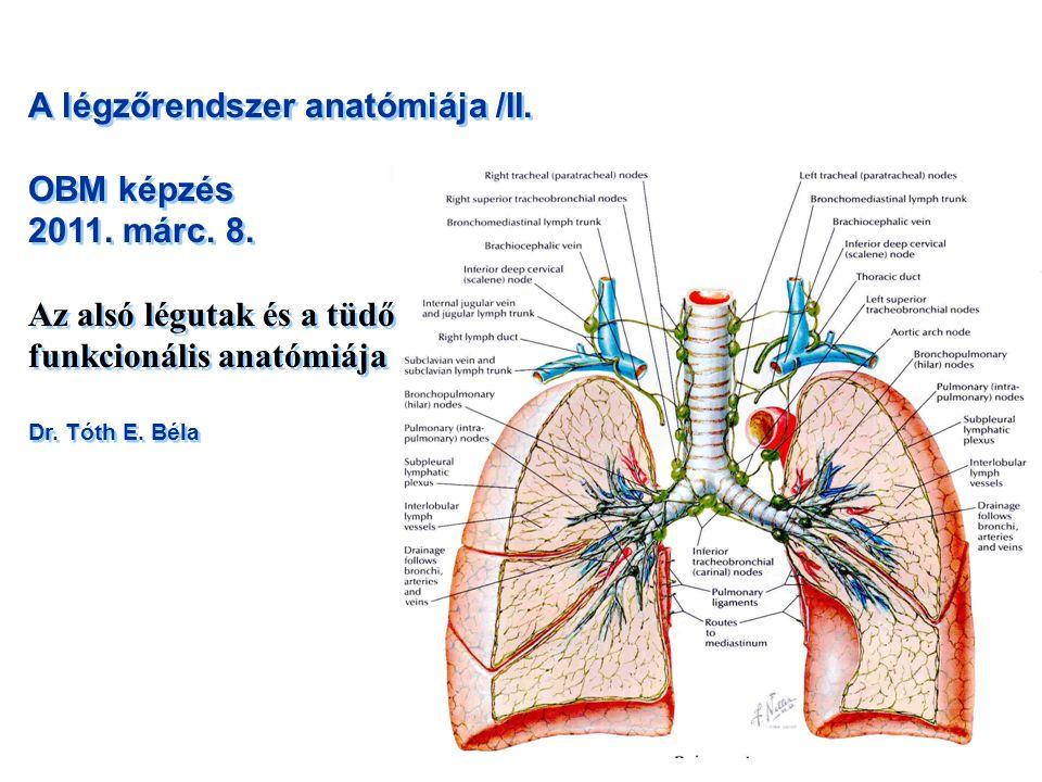 A légzőrendszer anatómiája /II. OBM képzés 2011. márc. 8. Az alsó légutak és a tüdő funkcionális anatómiája Dr. Tóth E. Béla A légzőrendszer anatómiáj